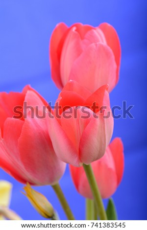 spring flowers banner. bunch of ...