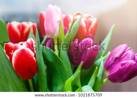 spring flowers banner  bunch of ...