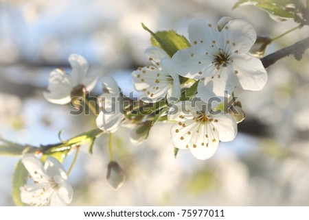 Spring flowers blooming on a branch of a tree.