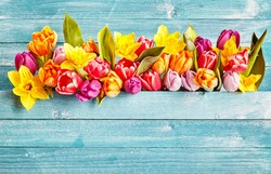 Spring flowers border with copy space. Colorful various spring flowers as tulips on rustic cyan wooden background