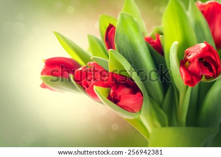Spring Flowers bunch. Beautiful red Tulips bouquet. Elegant Easter or Mother\'s Day gift over blurred green nature background. Springtime