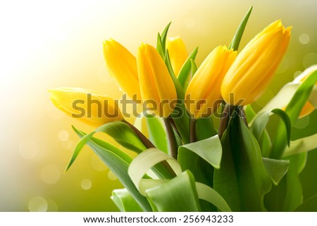 Spring Flowers bunch. Beautiful yellow Tulips bouquet. Elegant Easter or Mother\'s Day gift over nature green blurred background. Springtime.