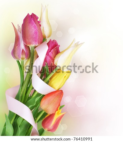 Spring Flowers bunch.Colorful Tulips