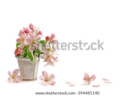 Spring flowers. Flowers. Spring flowers - apple branch.  Spring flowers isolated on white background. Card with spring flowers. Spring flowers on white with copy space.  Spring flowers border.