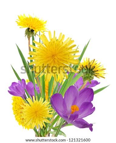 Spring flowers in dandelion and crocus