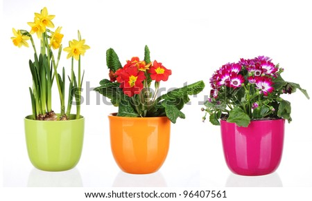 Spring flowers in flowerpots, isolated on white background #96407561