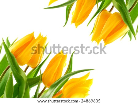 Spring flowers in front of white background