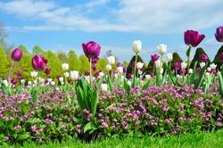 Spring flowers in Hampton Court garden, London, UK
