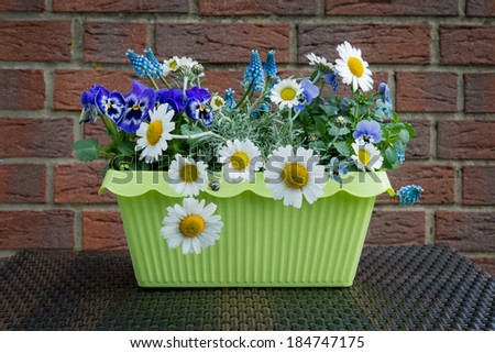 spring flowers in the flower box