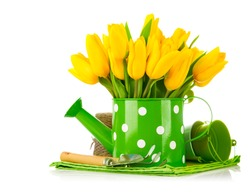 Spring flowers in watering can with garden tools. Isolated on white background