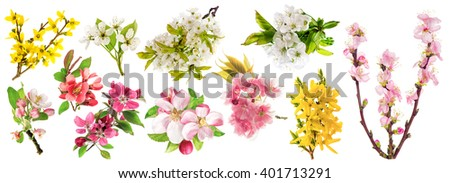 Spring flowers isolated on white background. Blossoms of apple tree, cherry twig, pear, almond, forsythia
