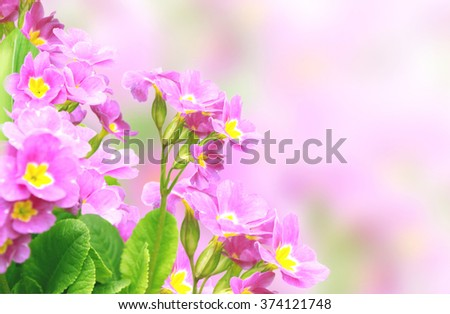 Spring flowers of lilac color