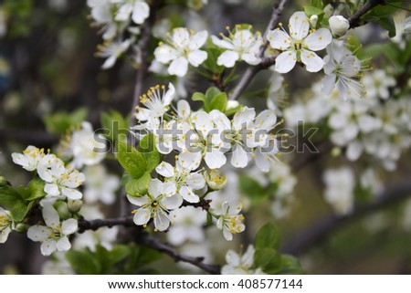 Spring flowers on a tree the tree blooms white flowers ez canvas spring flowers on a tree the tree blooms white flowers mightylinksfo
