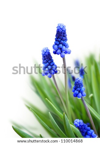 Spring flowers on a white background