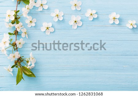 spring flowers on blue wooden background #1262831068