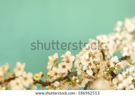 Spring Flowers On Green Background #186962513