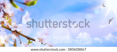 spring flowers on the blue sky background