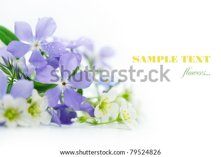 Spring flowers on white background.
