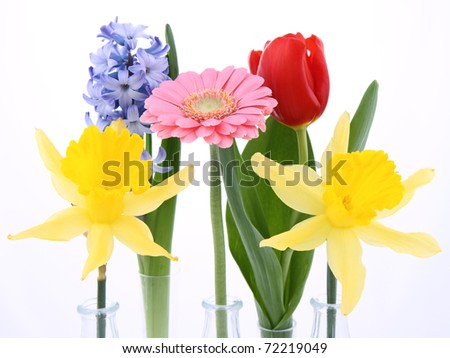 Spring flowers on white background: daffodils, tulip, hyacinth, gerbera