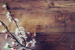 Spring flowers on wooden background with copy space for text. Cherry fresh blossom branch on wooden background. Vintage, retro, hipster tone photo.