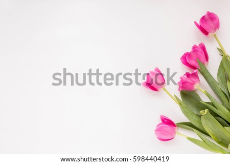 Spring flowers. Pink tulip on white background. Flat lay. #598440419