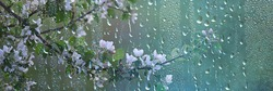 spring flowers rain drops, abstract blurred background flowers fresh rain
