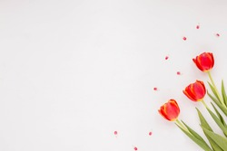 Spring flowers. Red tulip on white background. Flat lay, top view