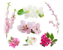 Spring flowers set  -  fresh flowers  tree twigs with blooming spring flowers isolated on white background
