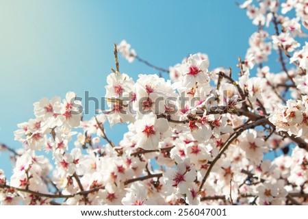 Spring Flowers./ Spring Flowers