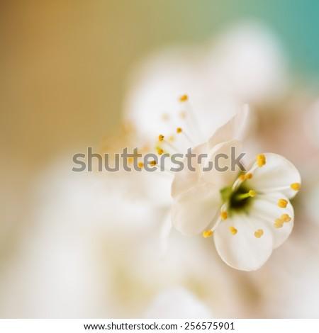 Spring Flowers/ Spring Flowers