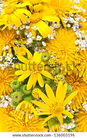 Spring Flowers with dandelion