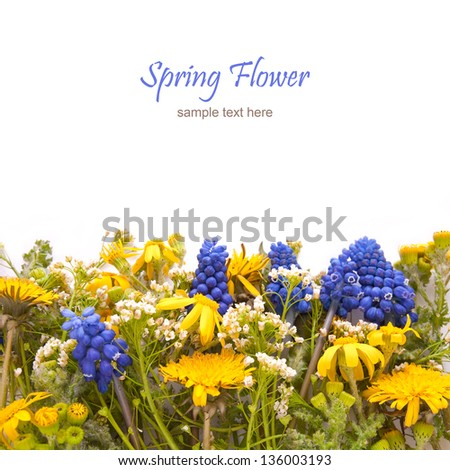 Spring Flowers with dandelion and muscari