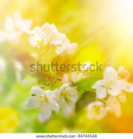 Spring flowers with sunshine