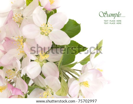 spring flowers with the place for text