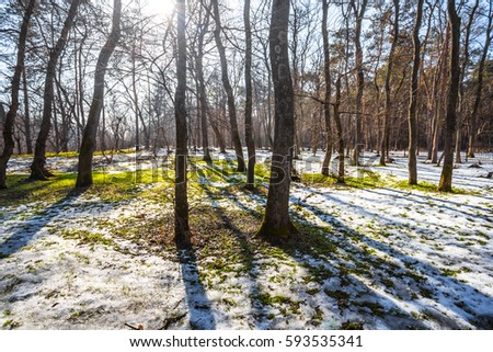 spring forest at the bright sunny day #593535341