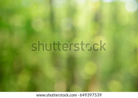 spring forest blurred background #649397539