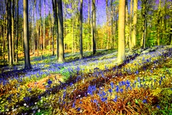 Spring forest covered with bluebells and anemones flowers