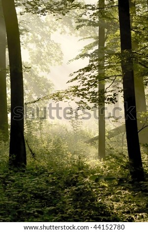 Spring forest in the fog illuminated by the light of morning sun.