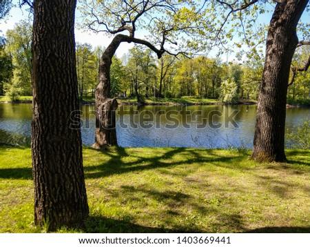 Spring forest lake trees landscape. Forest lake trees in spring forest. Spring forest lake trees view. Spring forrest lake trees landscape