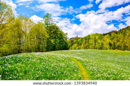 Spring forest meadow flowers landscape. Forest meadow flowers landscape. Forrest meadow flowers in spring. Springtime forest meadow flowers view #1393834940
