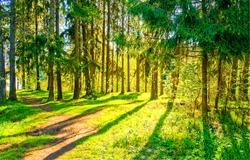 Spring forest pathway sunlight landscape