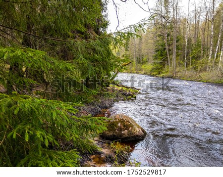 Spring forest river flow view. Forest river rock