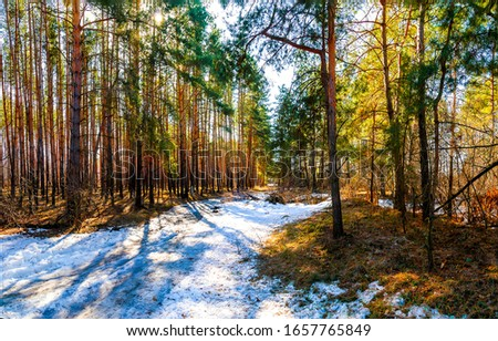 Spring forest snow scene view