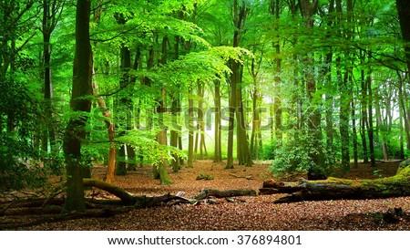 Spring forest Veluwe, the Netherlands #376894801
