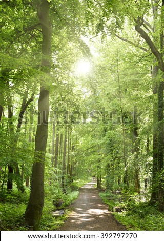Spring forest with sunbeam and smooth light. Empty forest path with no people. Tranquil scene, nature background of a mixed forest.