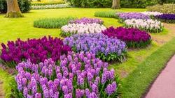 Spring Formal Garden. Beautiful garden of colorful flowers