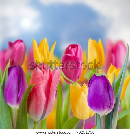 Spring garden, tulips - beautiful spring flowers