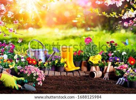 Spring Gardening - Flowerpots An Equipment In Sunny Garden