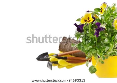 Spring gardening. Pot of pansies and garden tools on white