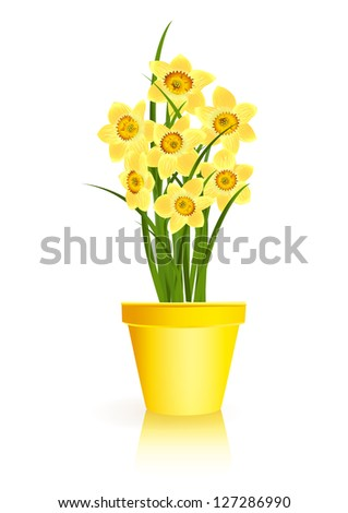 Spring Gardening. Yellow narcissus flowers in pot on white background. Raster illustration. Vector file included in portfolio